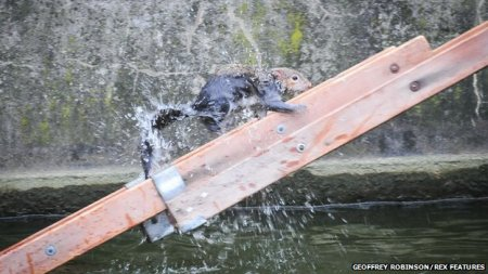A firefighter coaxed the stranded squirrel on to a ladder being used as a makeshift bridge